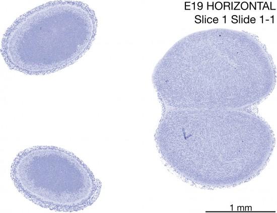 01-E19-Horizontal-01-1