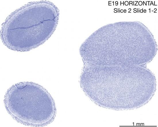 02-E19-Horizontal-01-2
