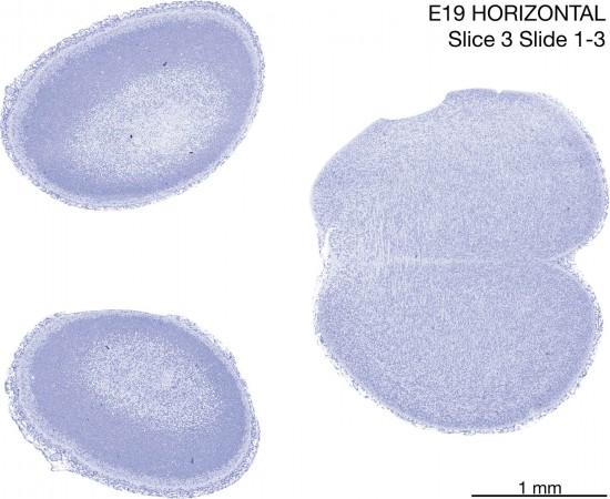 03-E19-Horizontal-01-3