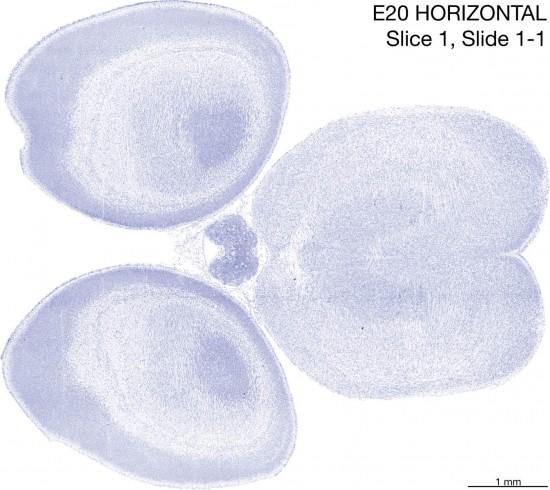 01-E20-horizontal-01-1