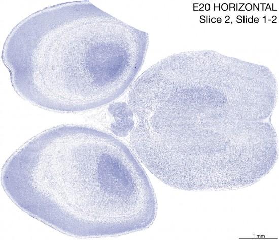 02-E20-horizontal-01-2