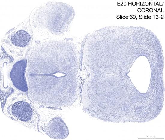069-E20-horiz-cor-13-2