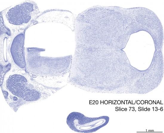 073-E20-horiz-cor-13-6
