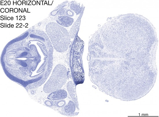123-E20-horiz-cor-22-2