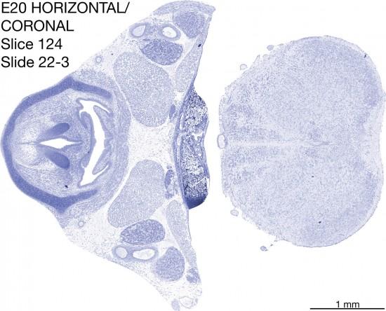 124-E20-horiz-cor-22-3