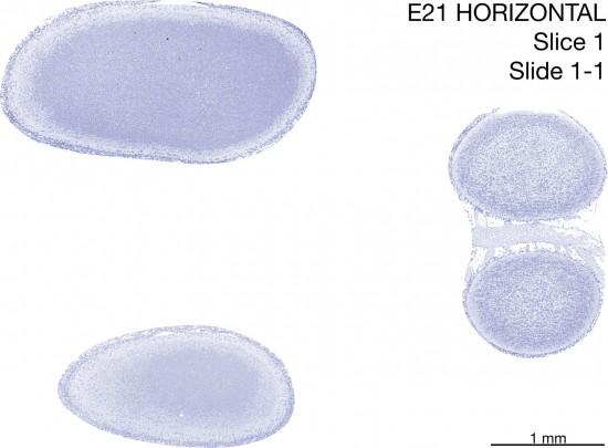 01-E21-horizontal-01-1