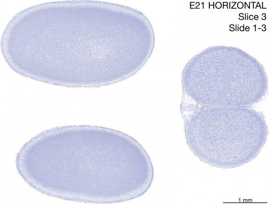 03-E21-horizontal-01-3